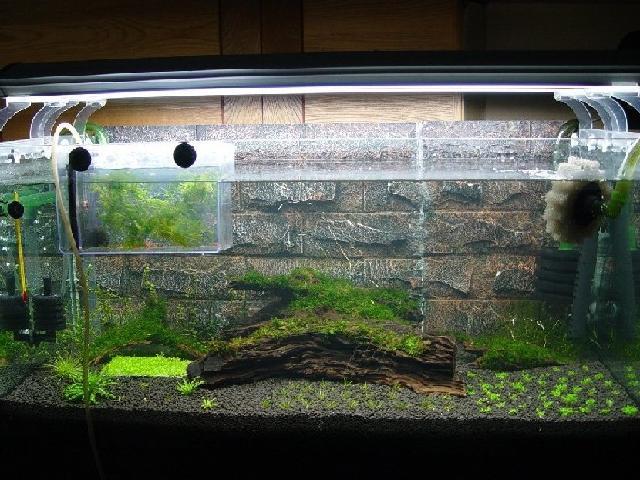 虾缸沉木造景图片