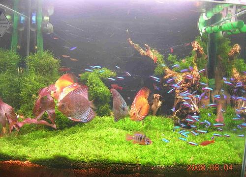 鱼缸造景原始森林图片